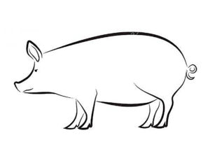 Свинья картинки раскраски (63)