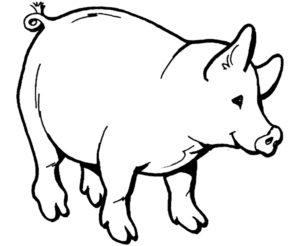 Свинья картинки раскраски (64)