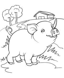 Свинья картинки раскраски (67)