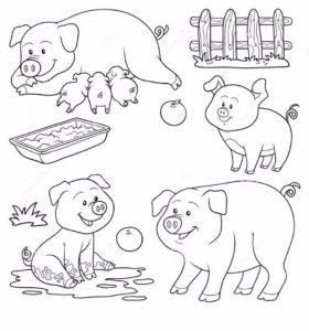 Свинья картинки раскраски (68)