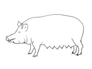 Свинья картинки раскраски (71)