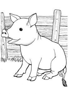 Свинья картинки раскраски (9)
