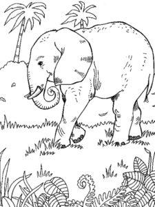 Слон картинки раскраски (12)