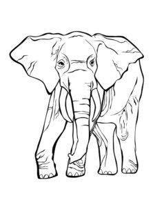 Слон картинки раскраски (18)