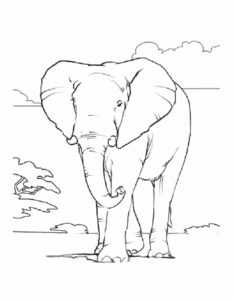 Слон картинки раскраски (19)