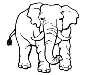 Слон картинки раскраски (20)