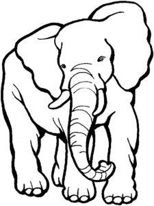 Слон картинки раскраски (3)