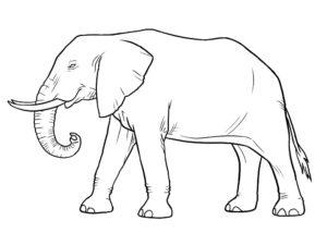 Слон картинки раскраски (33)