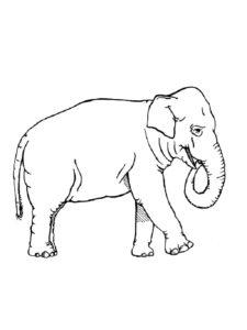 Слон картинки раскраски (37)