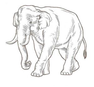 Слон картинки раскраски (40)