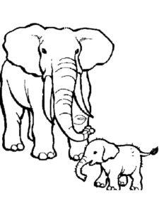 Слон картинки раскраски (41)