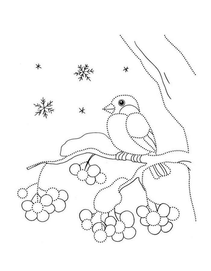 Снегирь картинки раскраски (1)