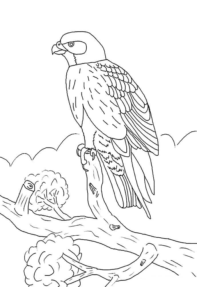 картинка сокола раскраска для донной