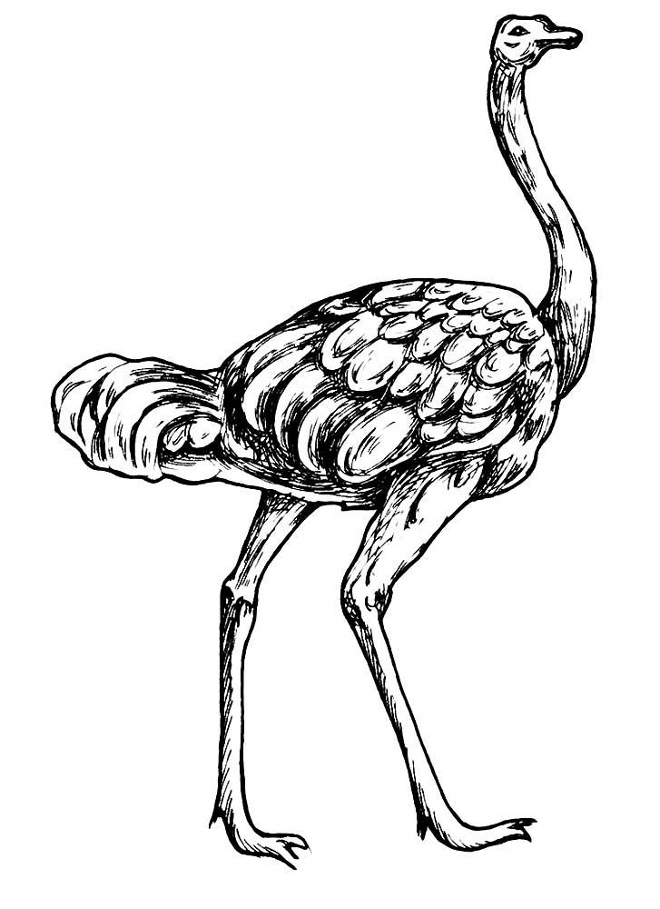 Свадебные, картинки страуса нарисованные