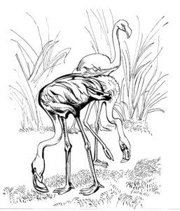 Фламинго картинки раскраски (13)