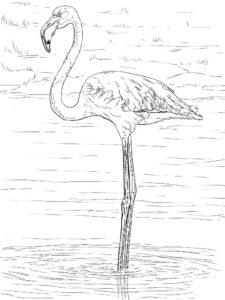 Фламинго картинки раскраски (16)