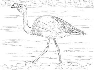 Фламинго картинки раскраски (17)