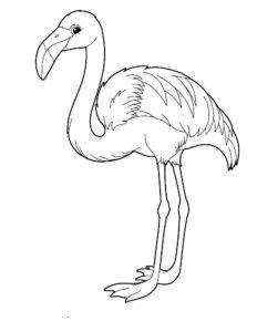 Фламинго картинки раскраски (18)