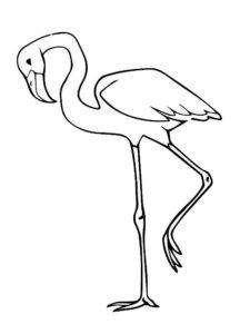 Фламинго картинки раскраски (20)