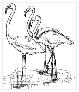 Фламинго картинки раскраски (23)