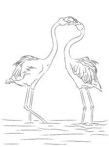 Фламинго картинки раскраски (27)