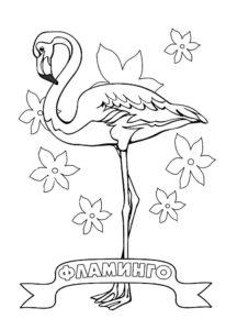 Фламинго картинки раскраски (30)