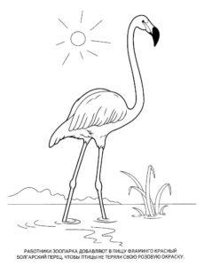 Фламинго картинки раскраски (34)