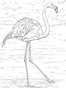 Фламинго картинки раскраски (35)