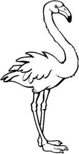 Фламинго картинки раскраски (4)