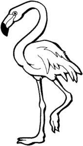 Фламинго картинки раскраски (6)