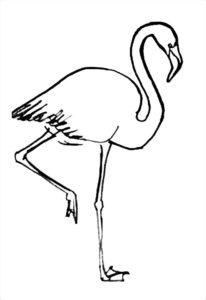 Фламинго картинки раскраски (7)