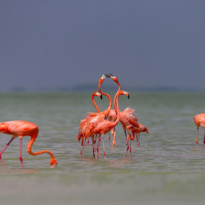 Фламинго раскраски