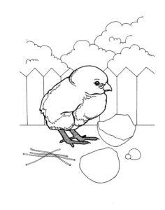 Цыпленок картинки раскраски (12)