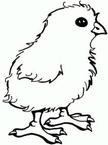 Цыпленок картинки раскраски (14)