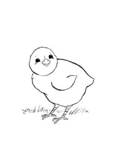 Цыпленок картинки раскраски (20)