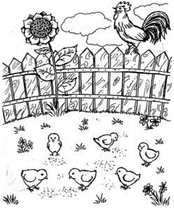 Цыпленок картинки раскраски (29)