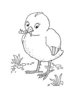 Цыпленок картинки раскраски (31)