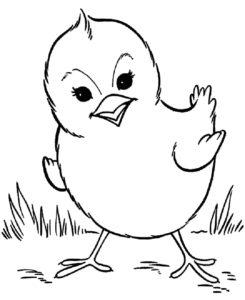 Цыпленок картинки раскраски (4)