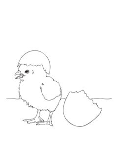 -картинки-раскраски-46-232x300 Цыпленок