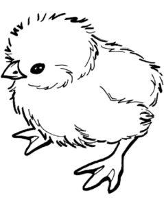 Цыпленок картинки раскраски (7)