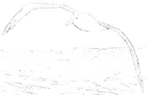 Чайка картинки раскраски (8)