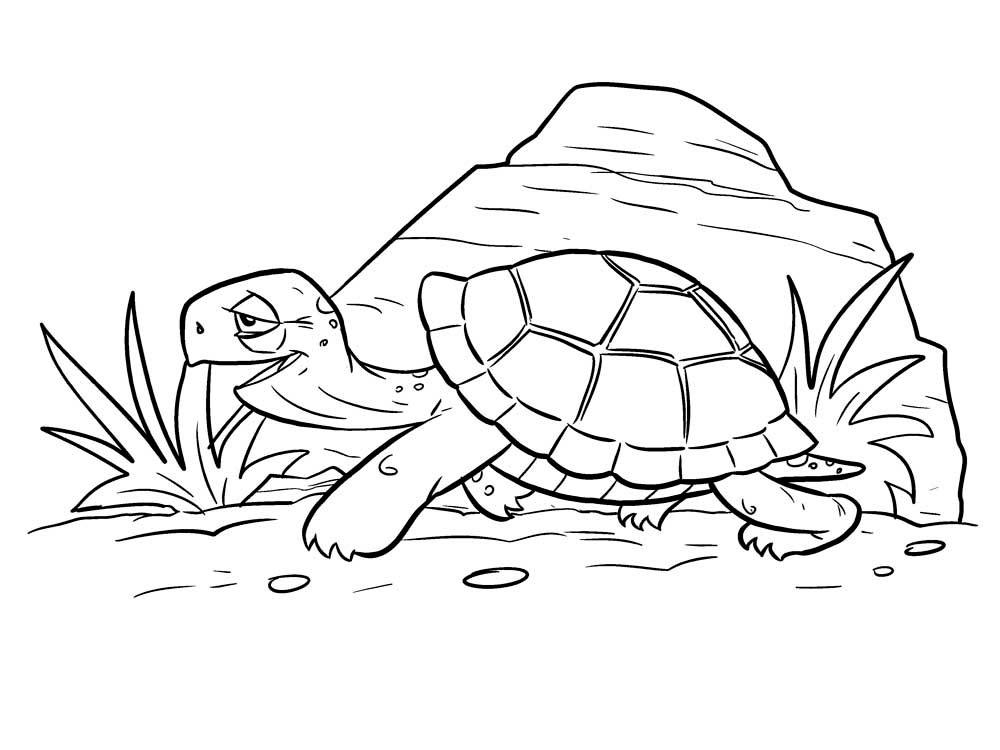 Черепаха картинки раскраски (10)