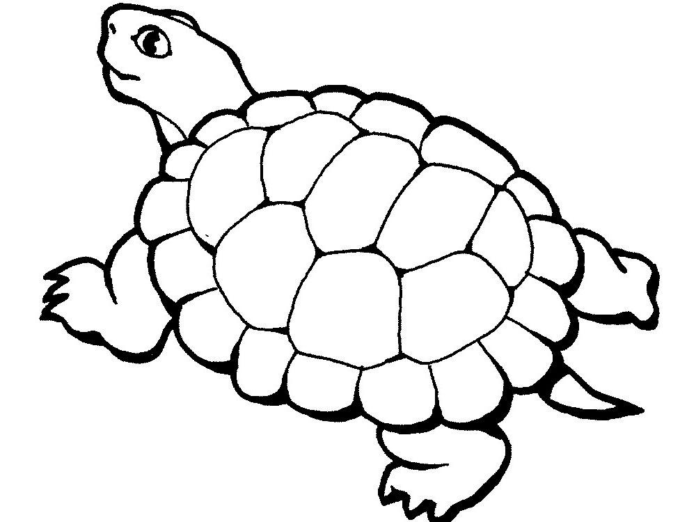 Черепаха картинки раскраски (11)