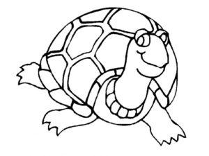 Черепаха картинки раскраски (15)