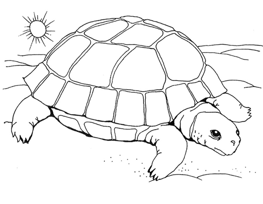Черепаха картинки раскраски (18)