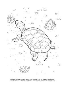 Черепаха картинки раскраски (19)