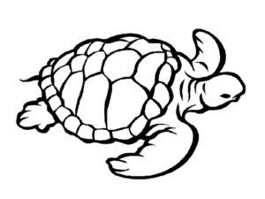 Черепаха картинки раскраски (22)