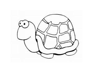 Черепаха картинки раскраски (23)