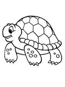 Черепаха картинки раскраски (25)