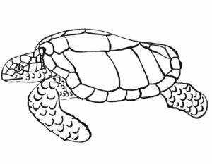 Черепаха картинки раскраски (26)